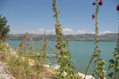 roses et lac d'Egirdir