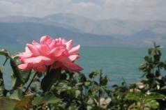 rose Egirdir