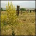 Cimetière seljoukide, Ahlat
