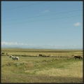 Steppe, entre Kars et Ani