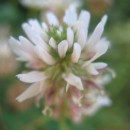 Fleur à déterminer
