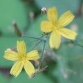 #01- Fleur à déterminer