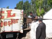 Kars : le marché aux bestiaux